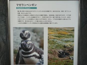 しながわ水族館150422-20.JPG